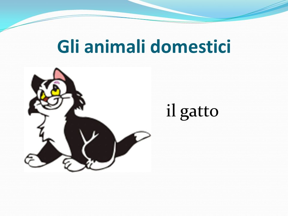 Gli animali domestici il gatto