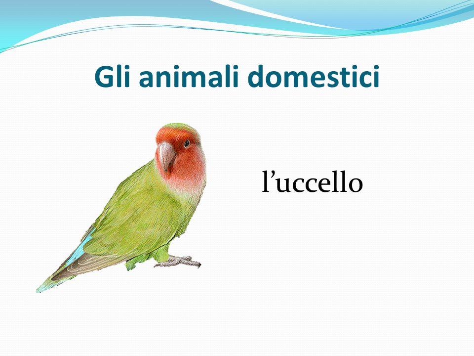 Gli animali domestici luccello