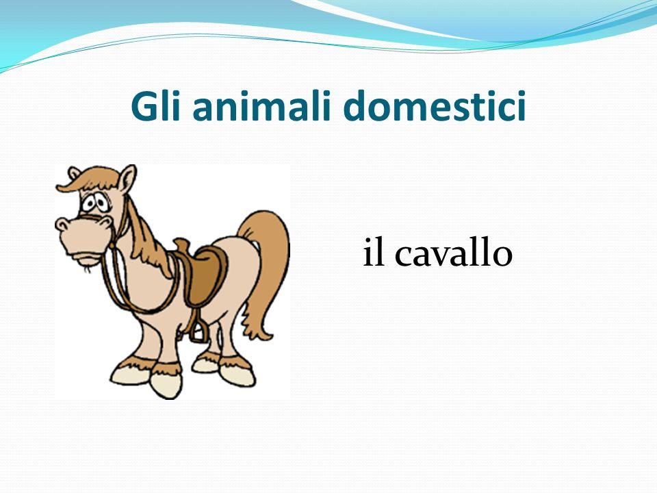 Gli animali domestici il cavallo