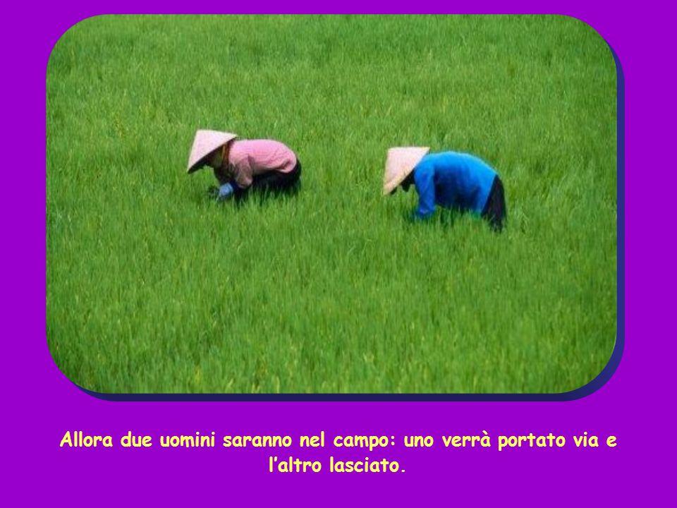 Allora due uomini saranno nel campo: uno verrà portato via e laltro lasciato.
