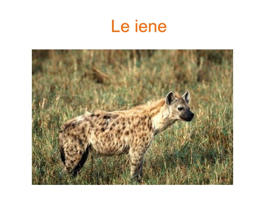 Le iene