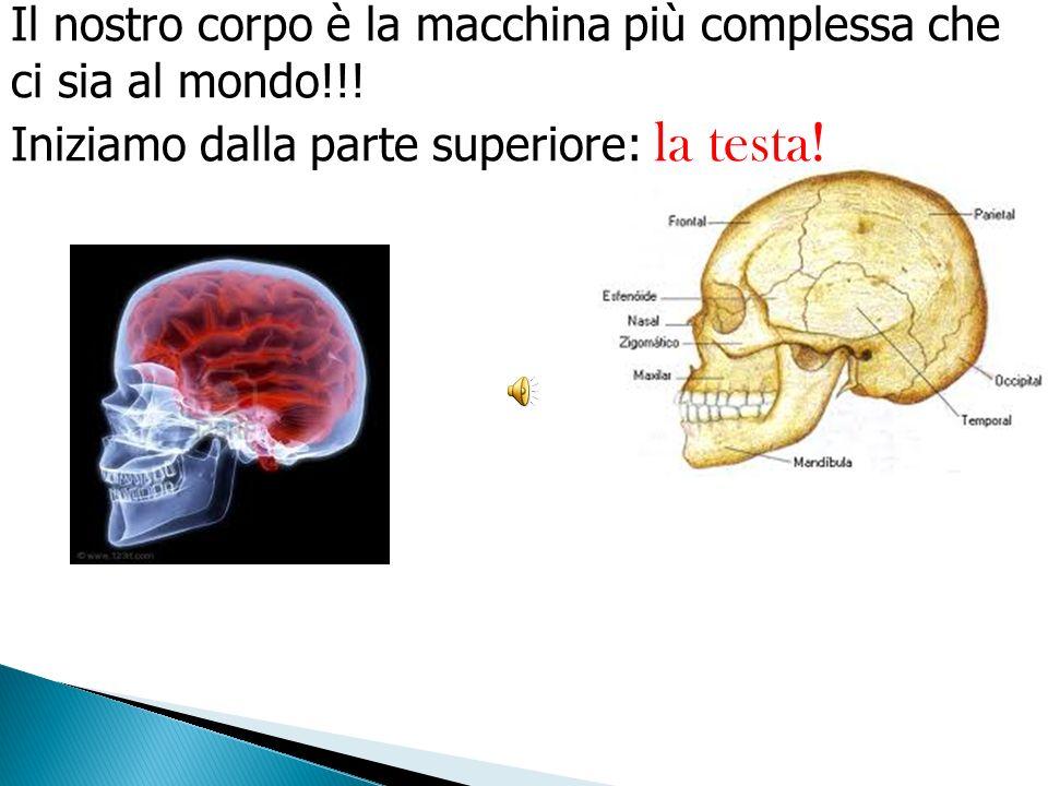 Il nostro corpo è la macchina più complessa che ci sia al mondo!!.