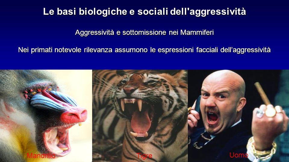 Aggressività e sottomissione nei Mammiferi Nei primati notevole rilevanza assumono le espressioni facciali dellaggressività Le basi biologiche e socia