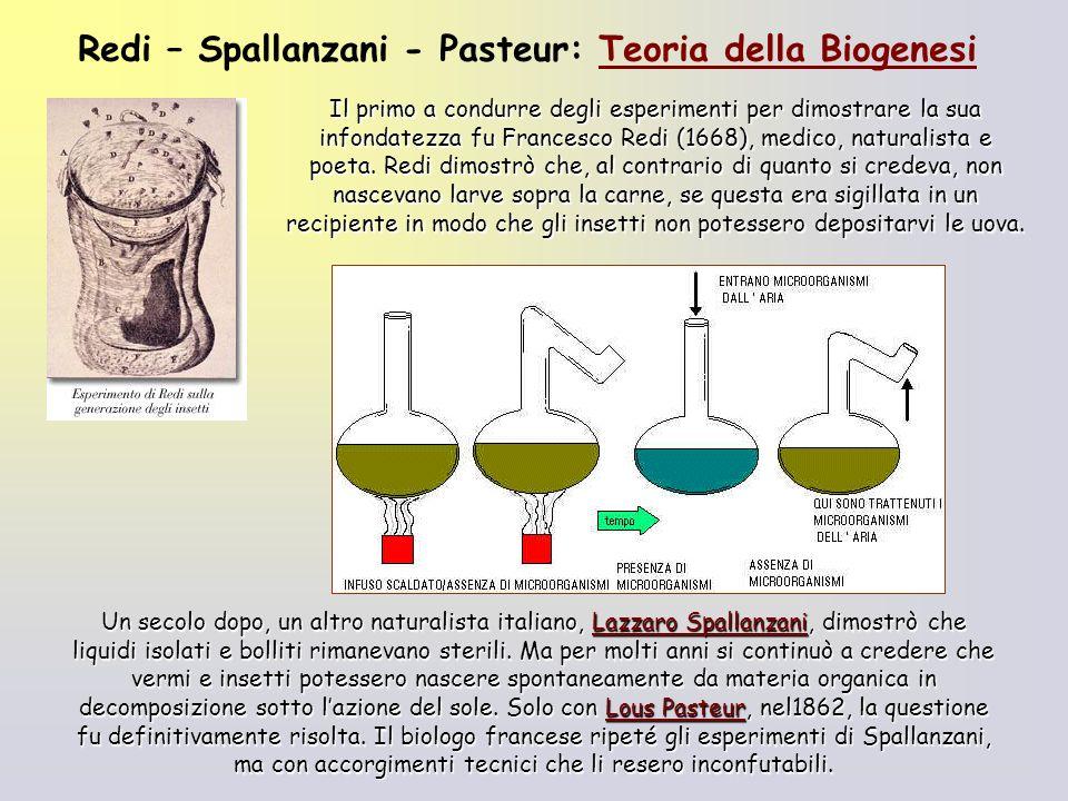 Il primo a condurre degli esperimenti per dimostrare la sua infondatezza fu Francesco Redi (1668), medico, naturalista e poeta. Redi dimostrò che, al