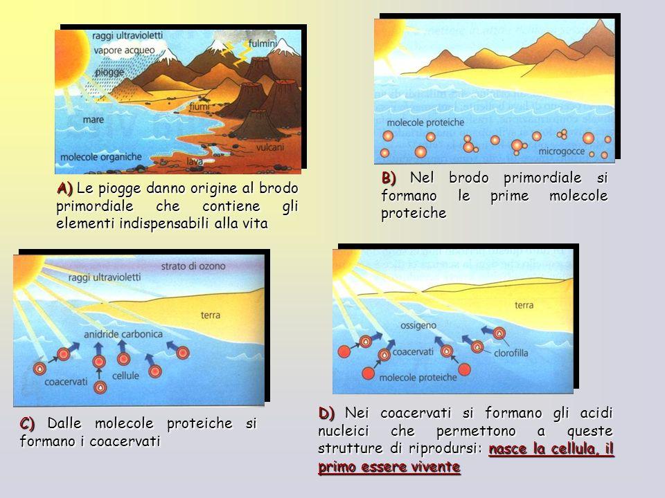 A) Le piogge danno origine al brodo primordiale che contiene gli elementi indispensabili alla vita B) Nel brodo primordiale si formano le prime moleco