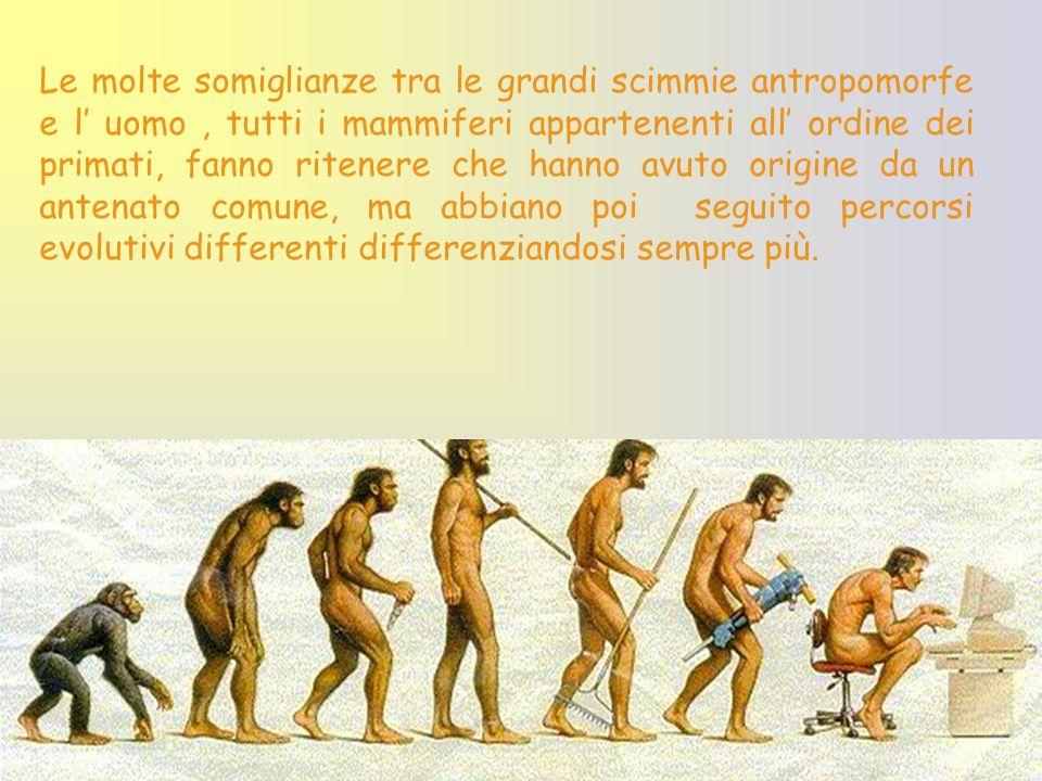 Le molte somiglianze tra le grandi scimmie antropomorfe e l uomo, tutti i mammiferi appartenenti all ordine dei primati, fanno ritenere che hanno avut