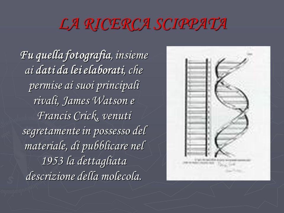 LA RICERCA SCIPPATA Fu quella fotografia, insieme ai dati da lei elaborati, che permise ai suoi principali rivali, James Watson e Francis Crick, venuti segretamente in possesso del materiale, di pubblicare nel 1953 la dettagliata descrizione della molecola.