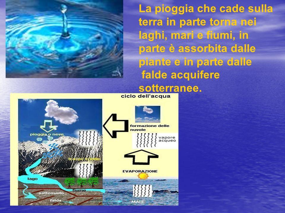 La pioggia che cade sulla terra in parte torna nei laghi, mari e fiumi, in parte è assorbita dalle piante e in parte dalle falde acquifere sotterranee