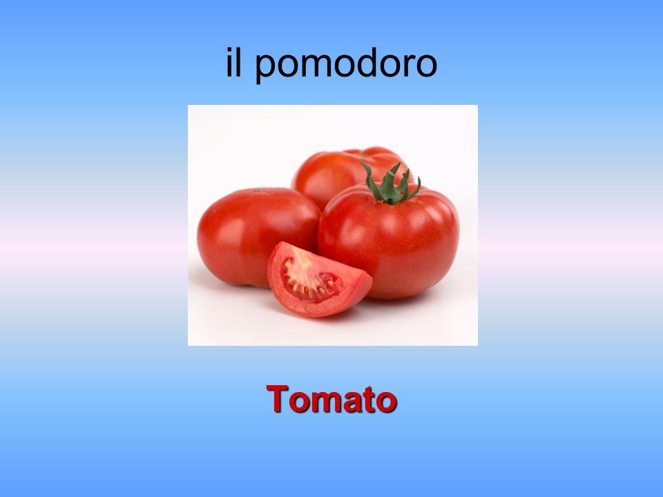 il pomodoro Tomato