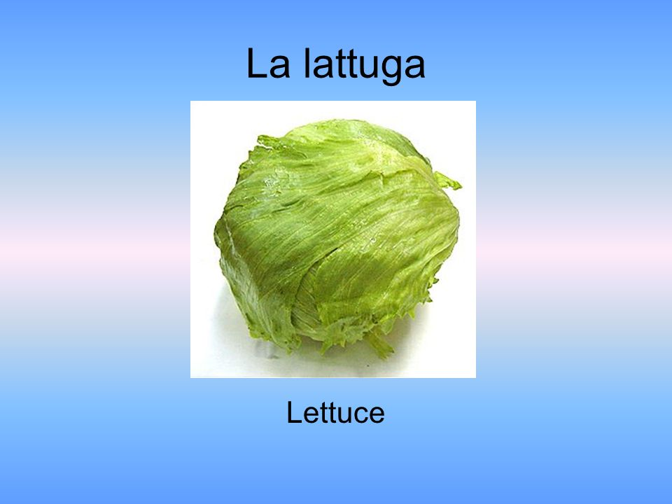 La lattuga Lettuce