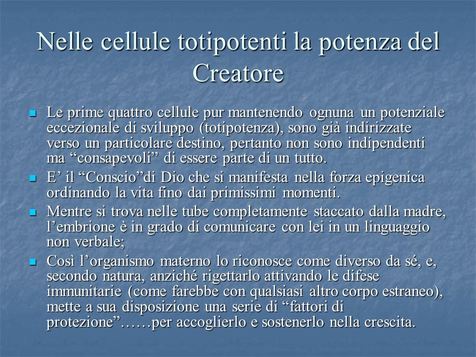 Nelle cellule totipotenti la potenza del Creatore Le prime quattro cellule pur mantenendo ognuna un potenziale eccezionale di sviluppo (totipotenza),