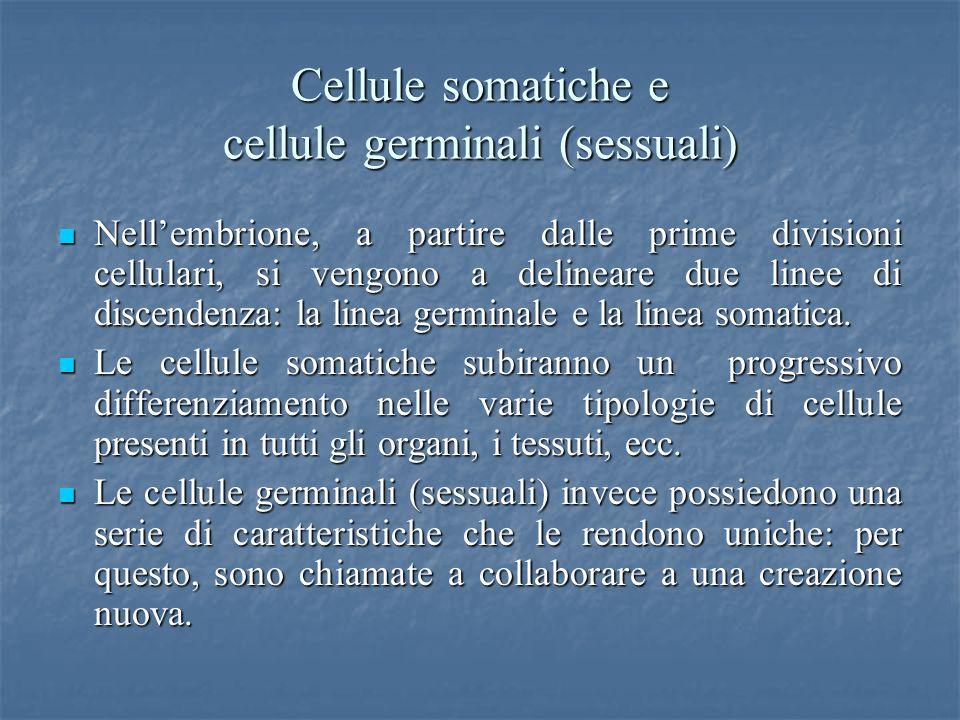 Cellule somatiche e cellule germinali (sessuali) Nellembrione, a partire dalle prime divisioni cellulari, si vengono a delineare due linee di discende