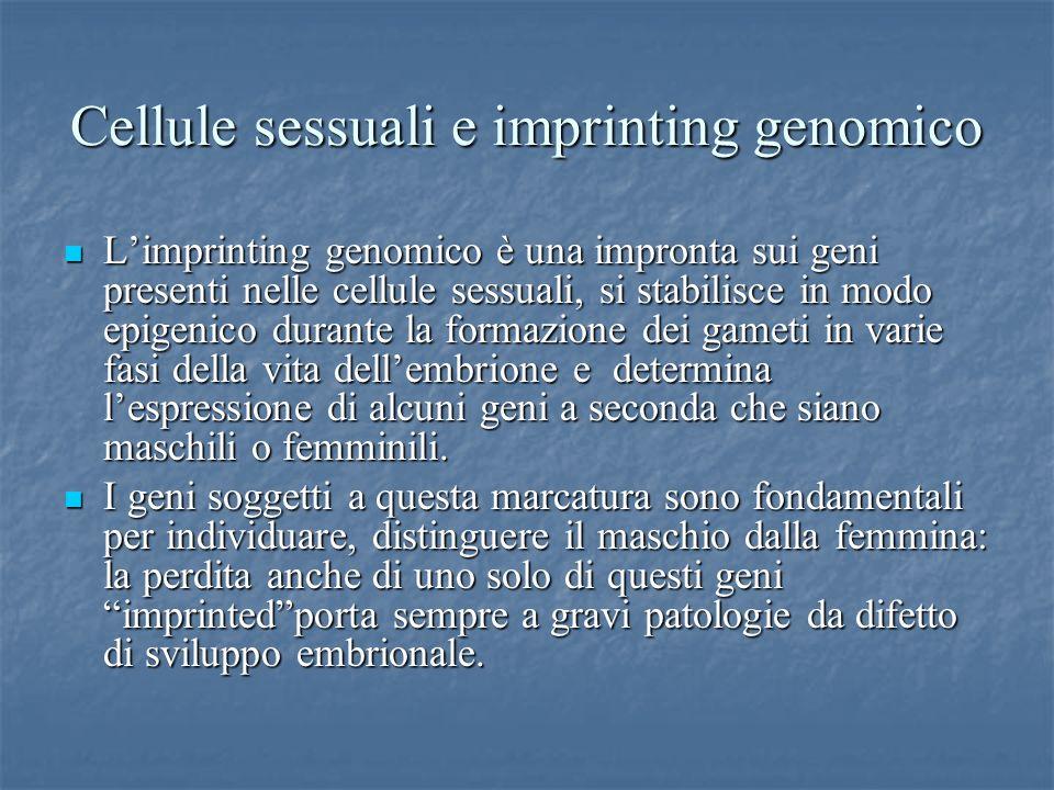 Cellule sessuali e imprinting genomico Limprinting genomico è una impronta sui geni presenti nelle cellule sessuali, si stabilisce in modo epigenico d