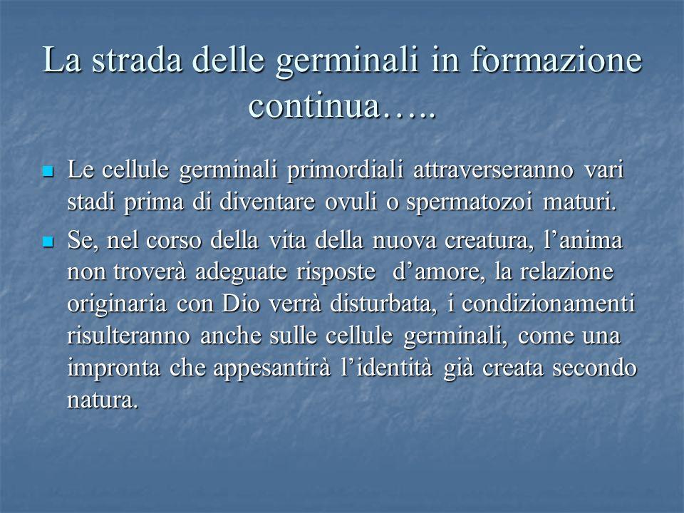 La strada delle germinali in formazione continua….. Le cellule germinali primordiali attraverseranno vari stadi prima di diventare ovuli o spermatozoi