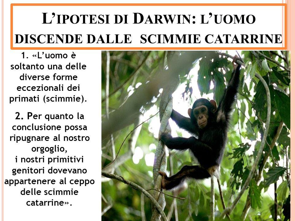 1. «Luomo è soltanto una delle diverse forme eccezionali dei primati (scimmie). 2. P er quanto la conclusione possa ripugnare al nostro orgoglio, i no