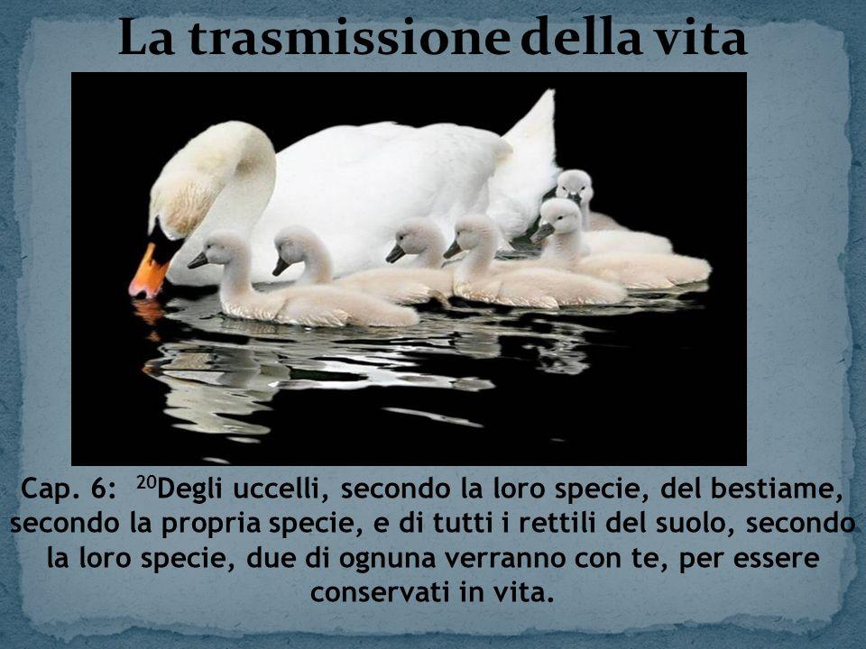 La trasmissione della vita Cap. 6: 20 Degli uccelli, secondo la loro specie, del bestiame, secondo la propria specie, e di tutti i rettili del suolo,