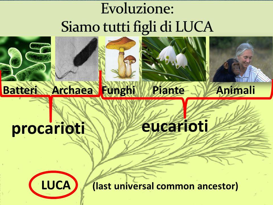 LUCA (last universal common ancestor) BatteriArchaeaFunghiPianteAnimali procarioti eucarioti