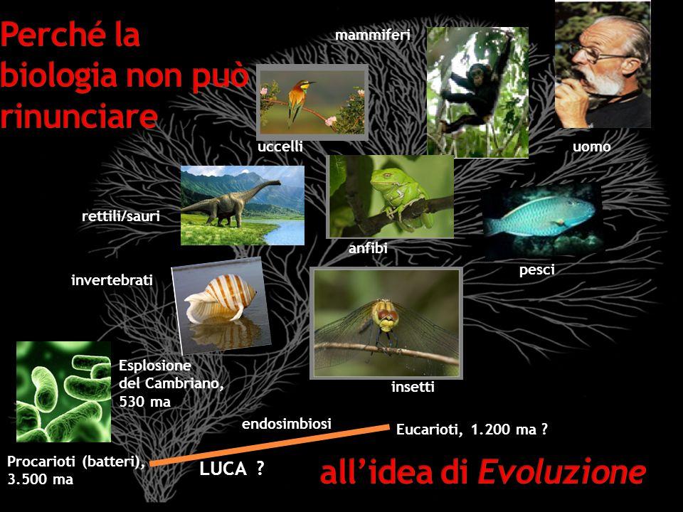LUCA ? Procarioti (batteri), 3.500 ma Eucarioti, 1.200 ma ? Esplosione del Cambriano, 530 ma endosimbiosi invertebrati insetti pesci rettili/sauri anf