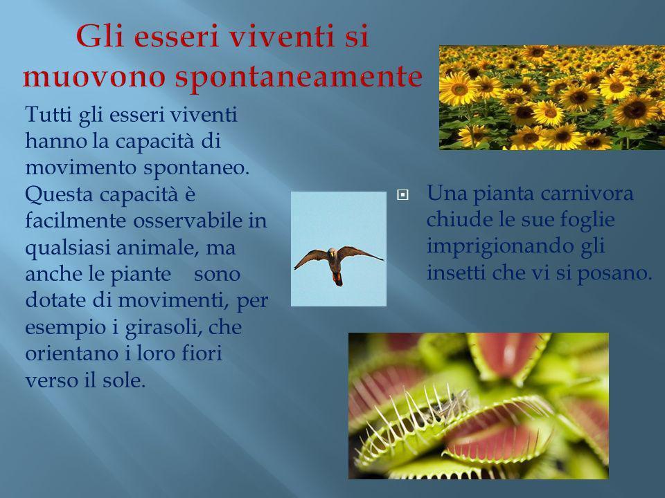 Una pianta carnivora chiude le sue foglie imprigionando gli insetti che vi si posano. Tutti gli esseri viventi hanno la capacità di movimento spontane