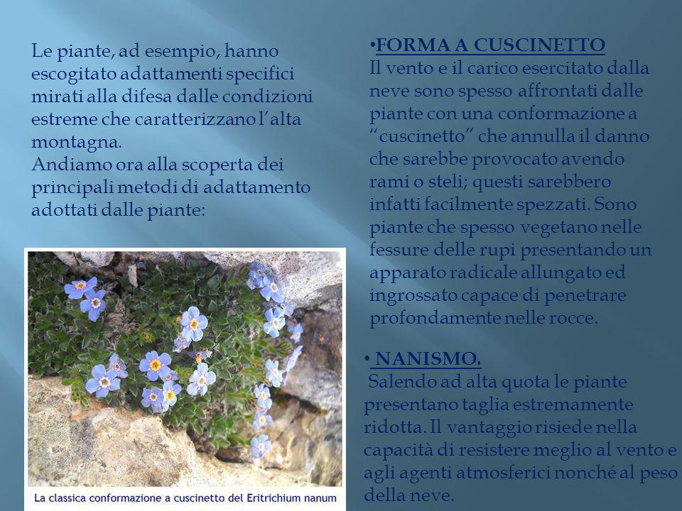 Le piante, ad esempio, hanno escogitato adattamenti specifici mirati alla difesa dalle condizioni estreme che caratterizzano lalta montagna. Andiamo o