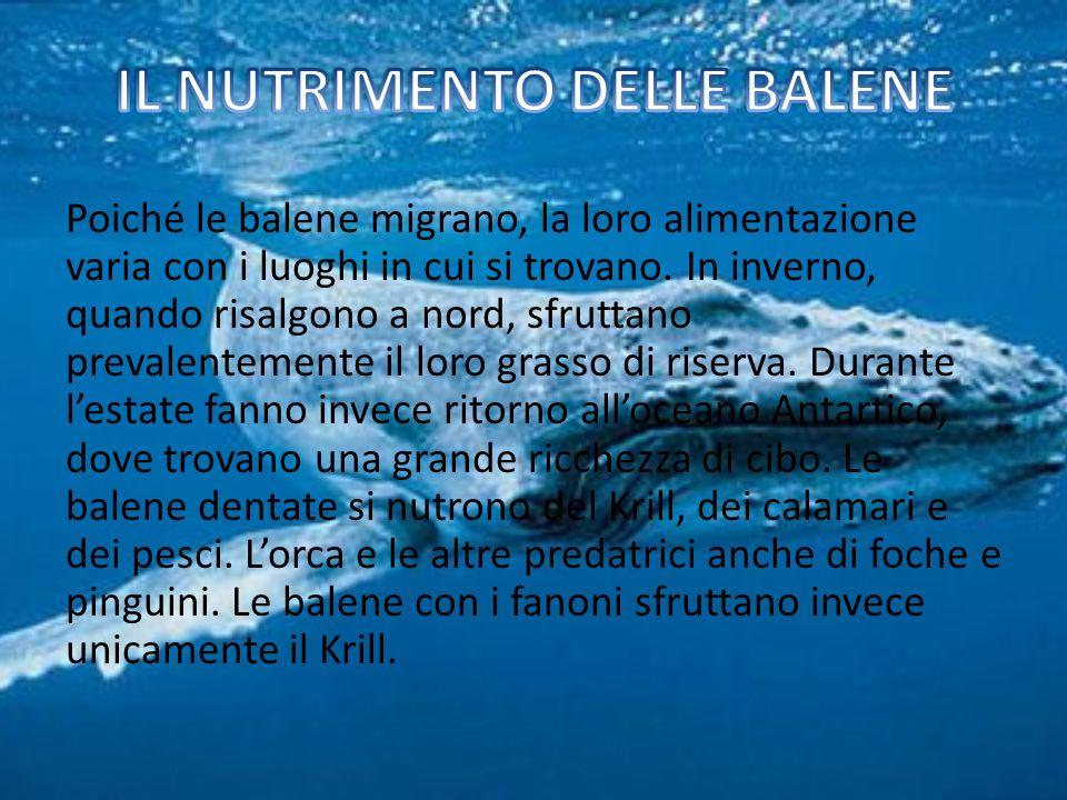 Poiché le balene migrano, la loro alimentazione varia con i luoghi in cui si trovano.