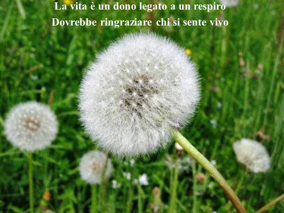 La vita è un dono legato a un respiro Dovrebbe ringraziare chi si sente vivo