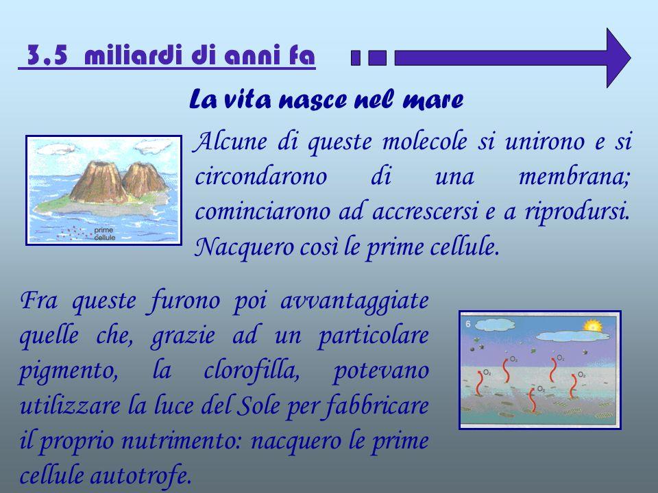 La vita nasce nel mare 3,5 miliardi di anni fa Alcune di queste molecole si unirono e si circondarono di una membrana; cominciarono ad accrescersi e a