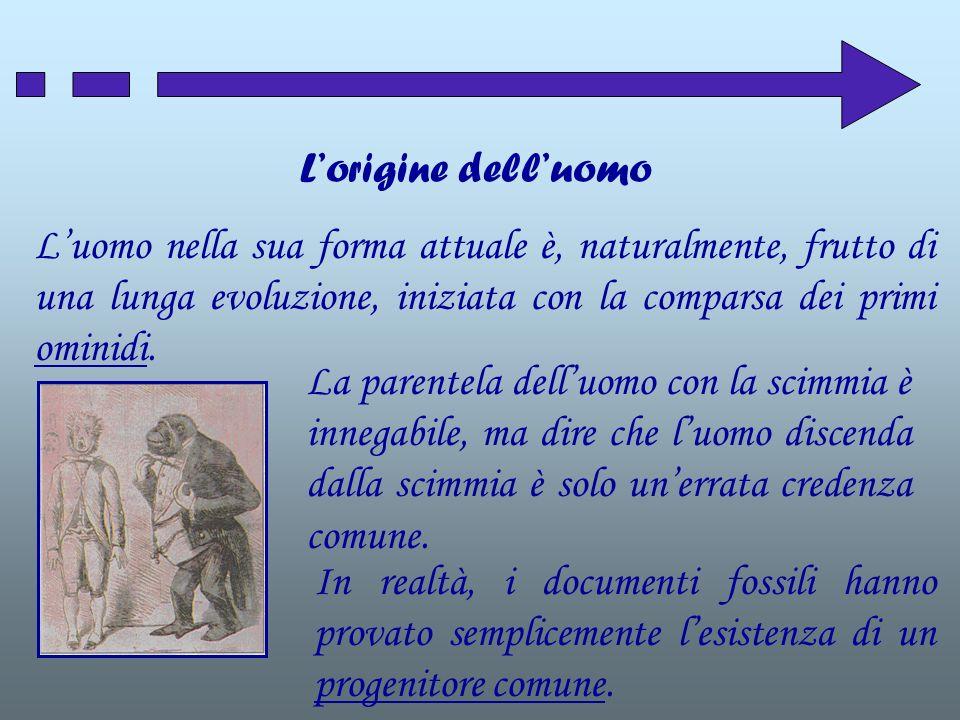 Lorigine delluomo Luomo nella sua forma attuale è, naturalmente, frutto di una lunga evoluzione, iniziata con la comparsa dei primi ominidi.