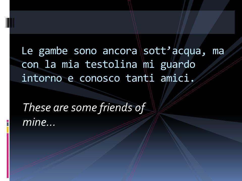 These are some friends of mine… Le gambe sono ancora sottacqua, ma con la mia testolina mi guardo intorno e conosco tanti amici.