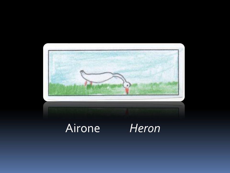 Airone Heron