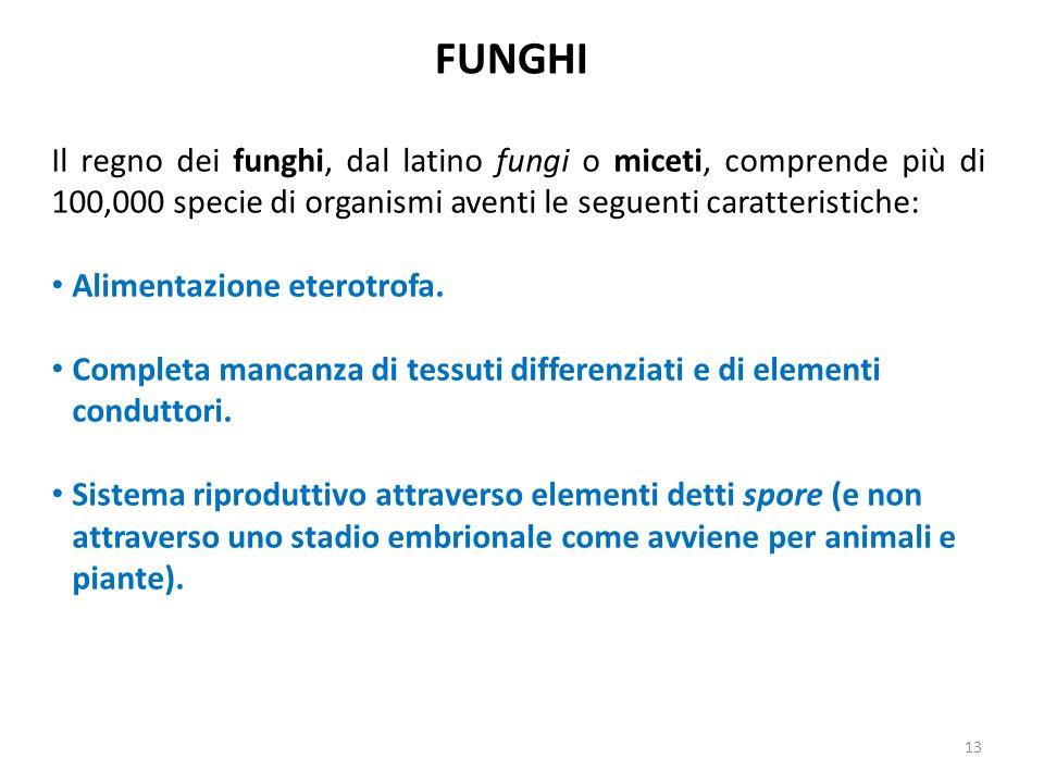 FUNGHI Il regno dei funghi, dal latino fungi o miceti, comprende più di 100,000 specie di organismi aventi le seguenti caratteristiche: Alimentazione