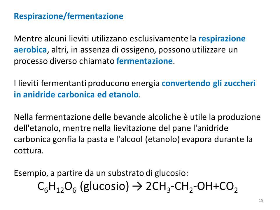 Respirazione/fermentazione Mentre alcuni lieviti utilizzano esclusivamente la respirazione aerobica, altri, in assenza di ossigeno, possono utilizzare