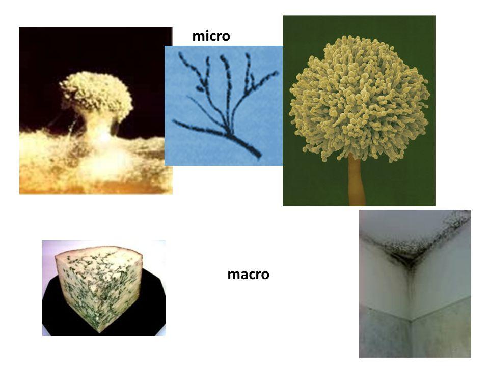 micro macro 21