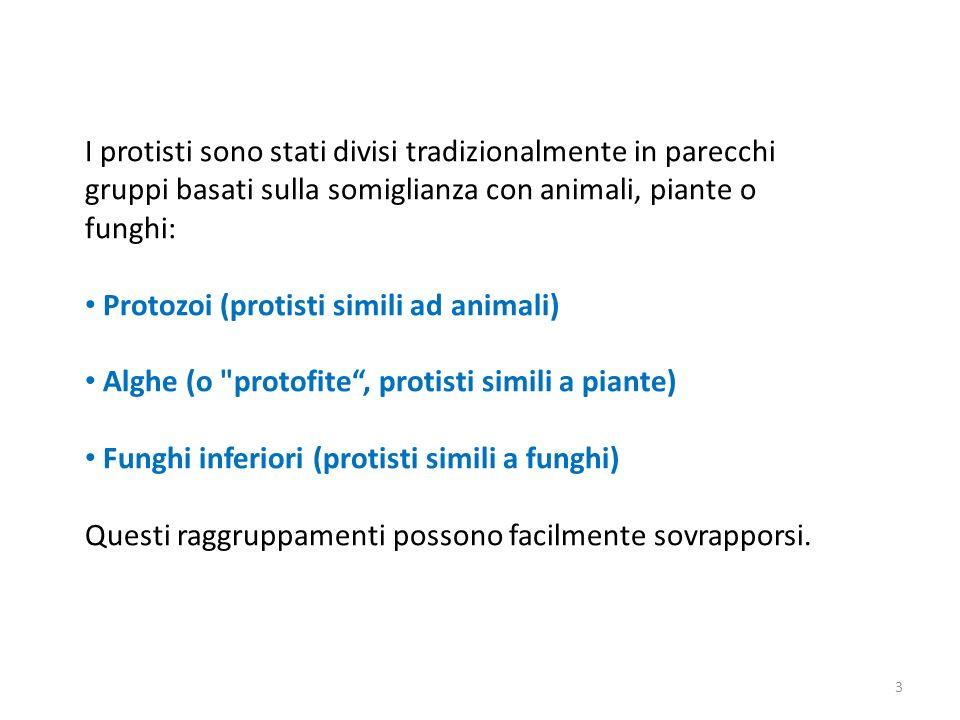 I protisti sono stati divisi tradizionalmente in parecchi gruppi basati sulla somiglianza con animali, piante o funghi: Protozoi (protisti simili ad a