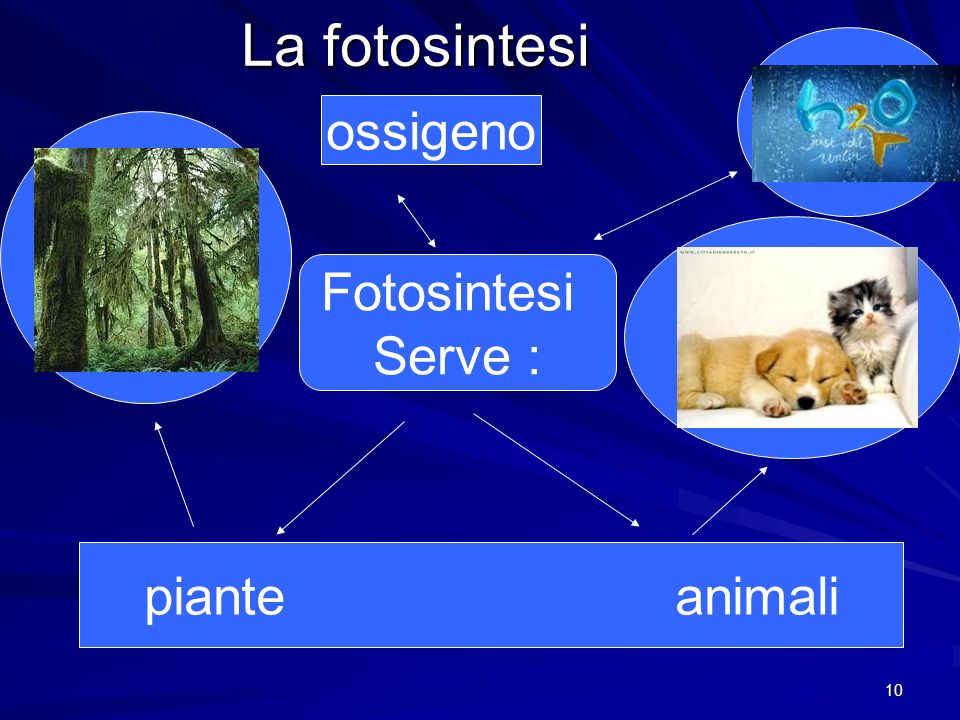 10 La fotosintesi Fotosintesi Serve : piante animali ossigeno