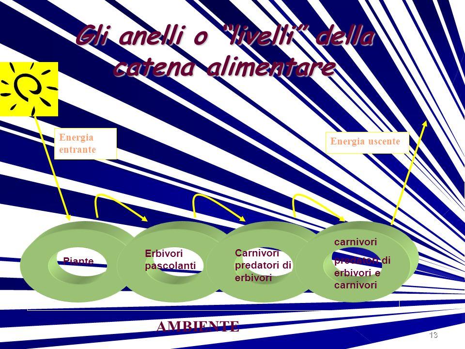 13 Gli anelli o livelli della catena alimentare Energia entrante Energia uscente Piante Erbivori pascolanti Carnivori predatori di erbivori carnivori