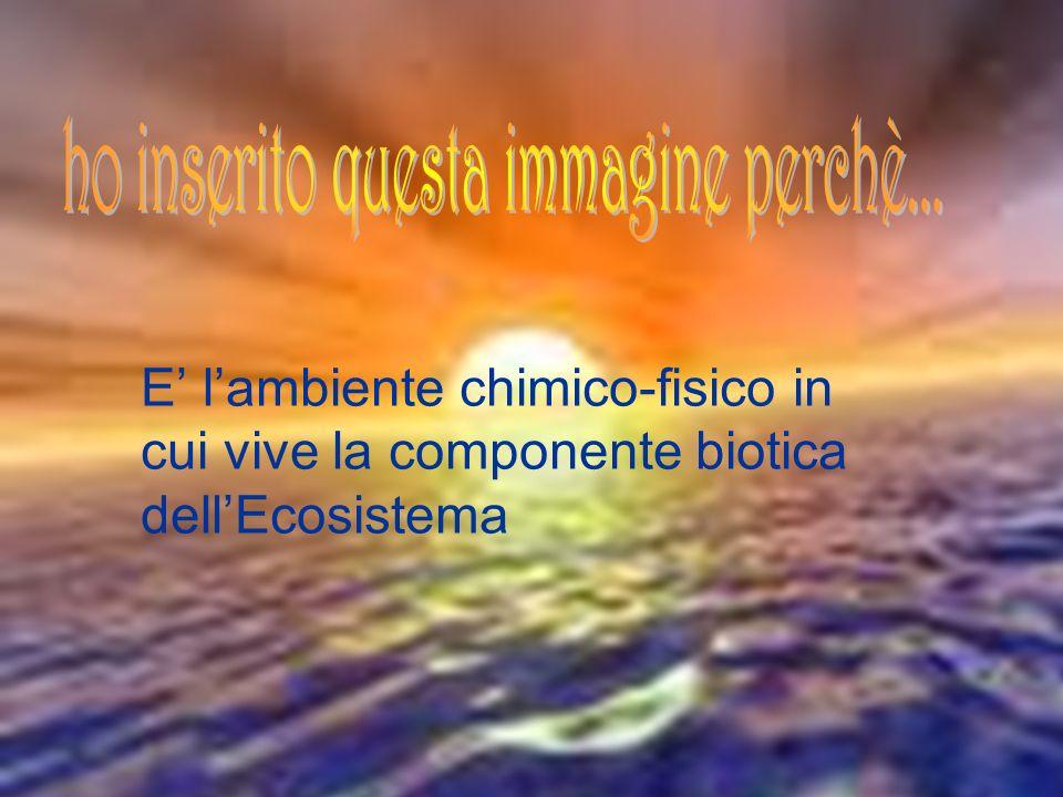 6 COMPONENTE ABIOTICA E la parte inorganica dellEcosistema E lambiente chimico-fisico in cui vive la componente biotica dellEcosistema