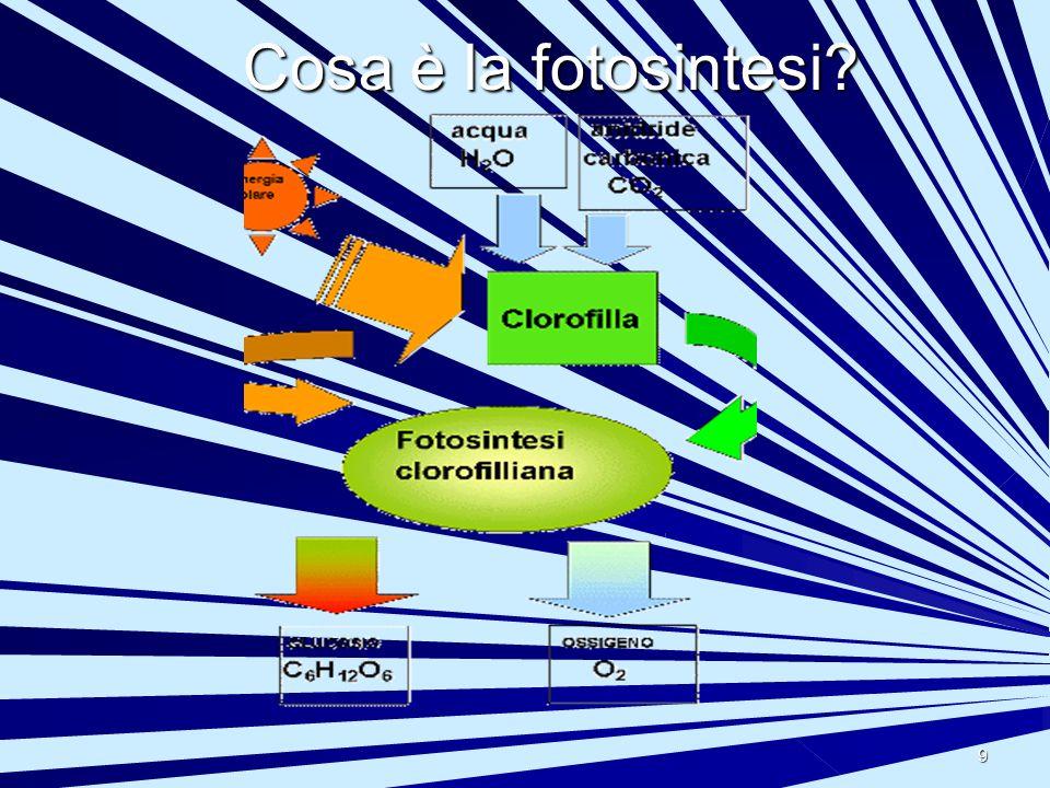 10 La fotosintesi Fotosintesi Serve : piante animali ossigeno