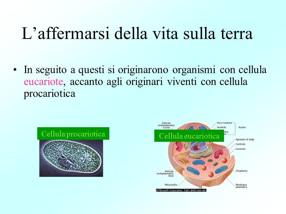 Laffermarsi della vita sulla terra In seguito a questi si originarono organismi con cellula eucariote, accanto agli originari viventi con cellula proc