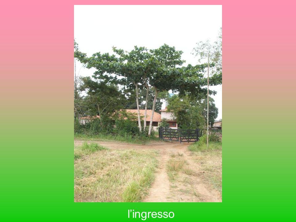lingresso