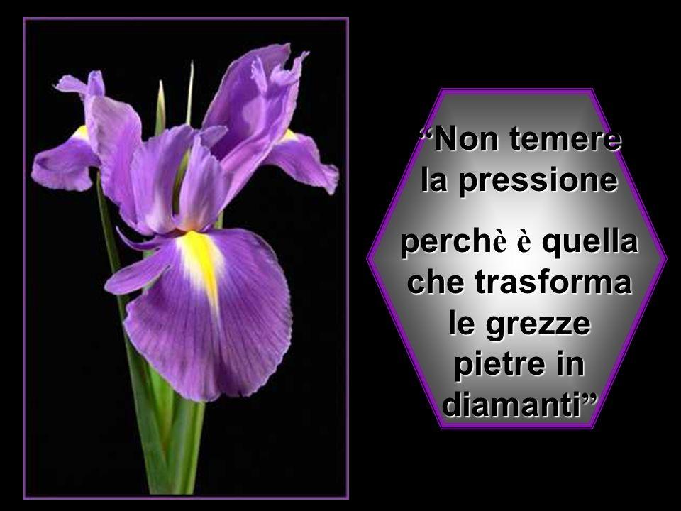 Non temere la pressione Non temere la pressione perch è è quella che trasforma le grezze pietre in diamanti perch è è quella che trasforma le grezze pietre in diamanti