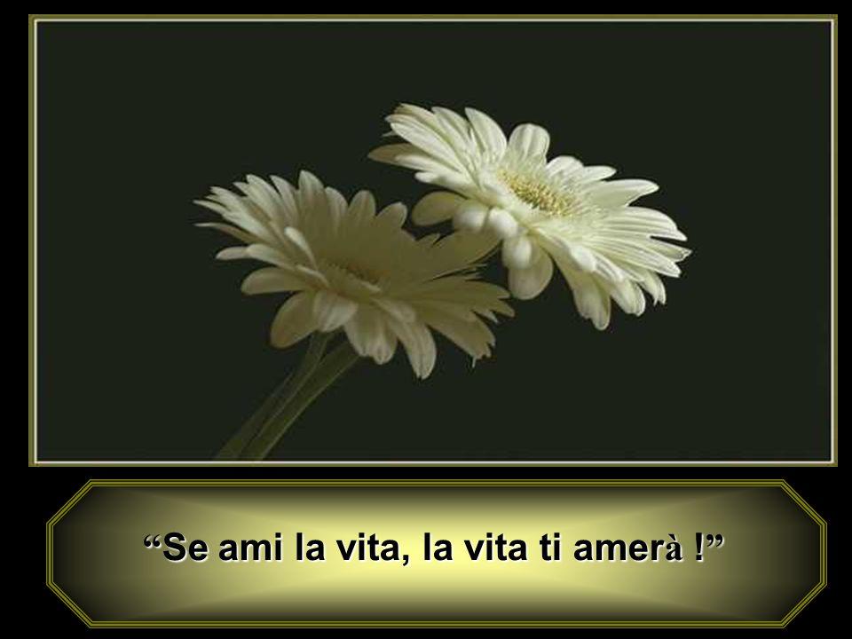 Se ami la vita, la vita ti amer à ! Se ami la vita, la vita ti amer à !