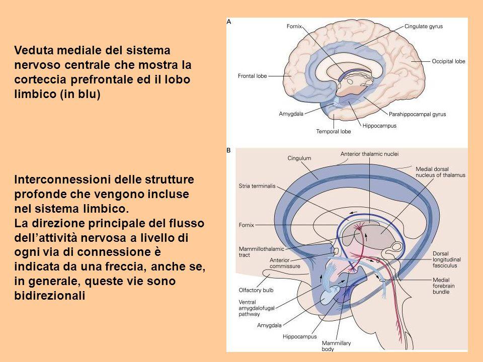 Veduta mediale del sistema nervoso centrale che mostra la corteccia prefrontale ed il lobo limbico (in blu) Interconnessioni delle strutture profonde