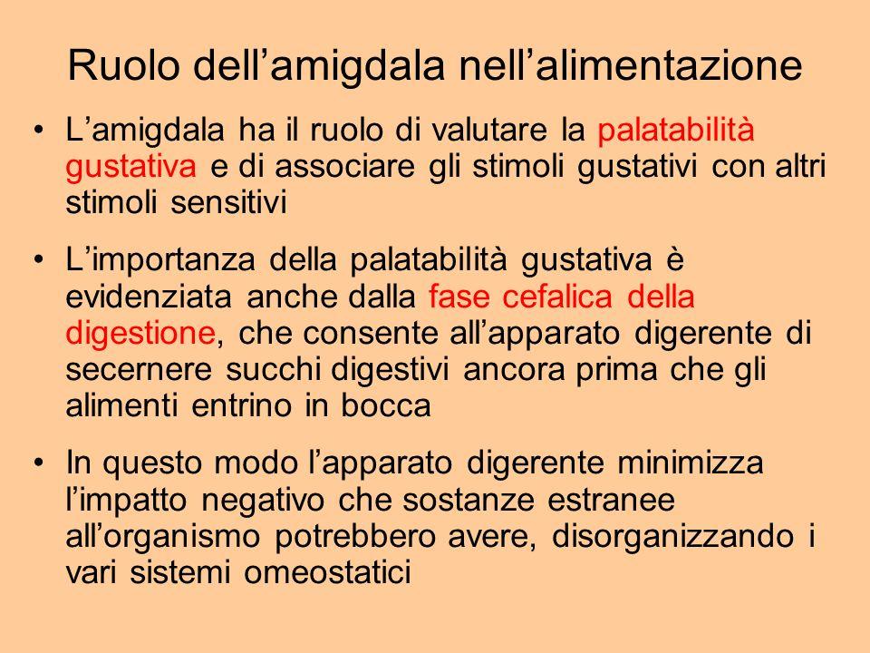 Ruolo dellamigdala nellalimentazione Lamigdala ha il ruolo di valutare la palatabilità gustativa e di associare gli stimoli gustativi con altri stimol