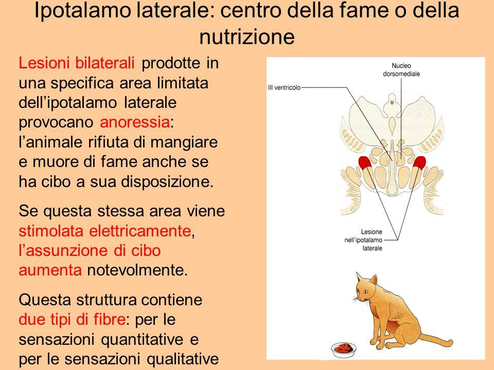 Ipotalamo laterale: centro della fame o della nutrizione Lesioni bilaterali prodotte in una specifica area limitata dellipotalamo laterale provocano a