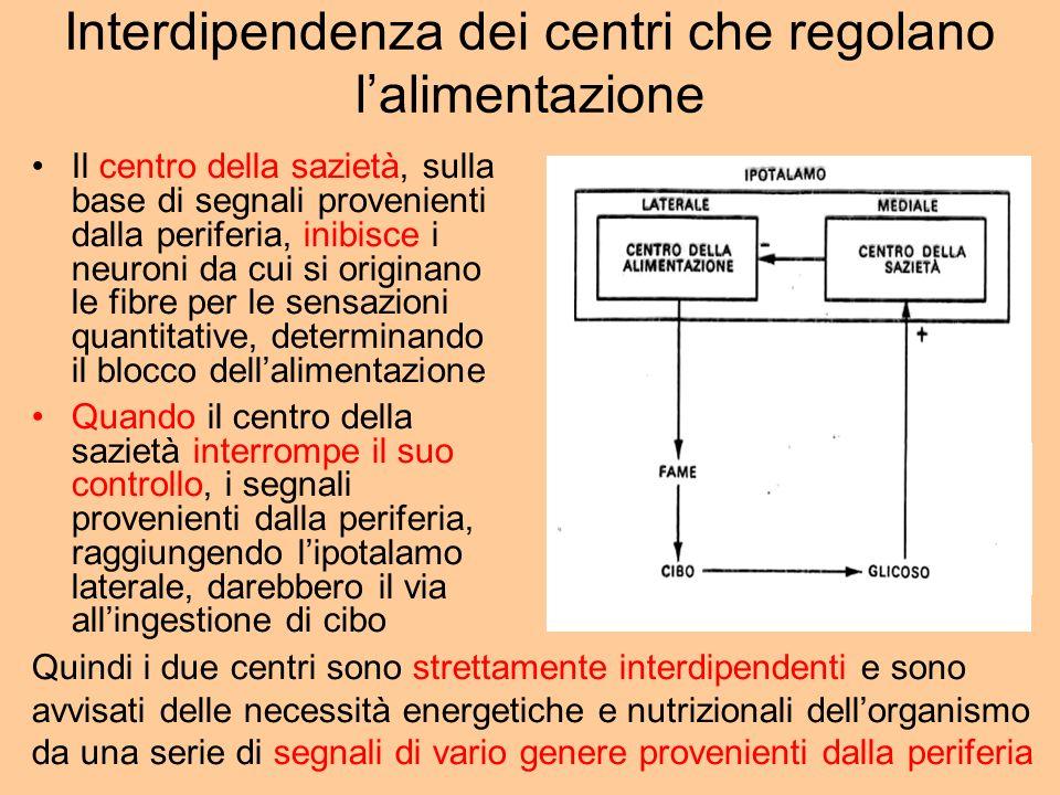 Interdipendenza dei centri che regolano lalimentazione Il centro della sazietà, sulla base di segnali provenienti dalla periferia, inibisce i neuroni