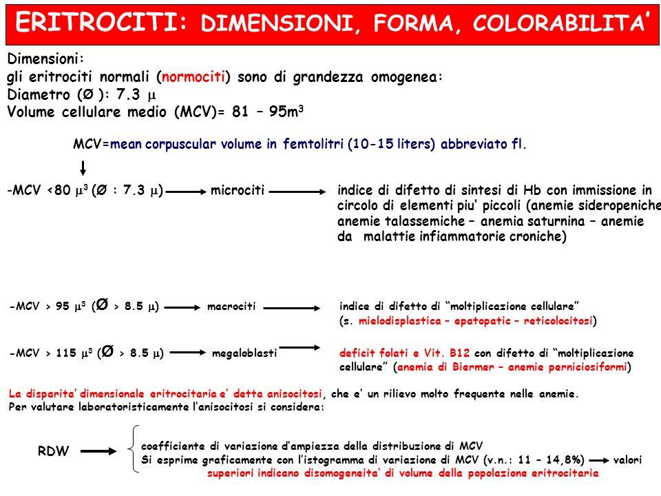 ERITROCITI: DIMENSIONI, FORMA, COLORABILITA Dimensioni: gli eritrociti normali (normociti) sono di grandezza omogenea: Diametro ( Ø ): 7.3 Volume cell