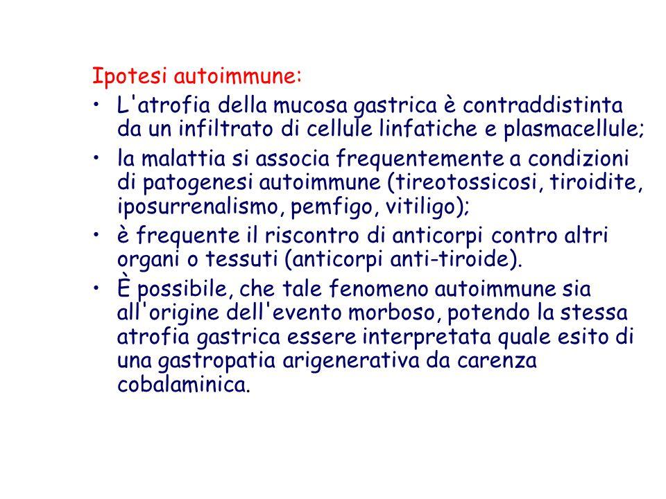 Ipotesi autoimmune: L'atrofia della mucosa gastrica è contraddistinta da un infiltrato di cellule linfatiche e plasmacellule; la malattia si associa f