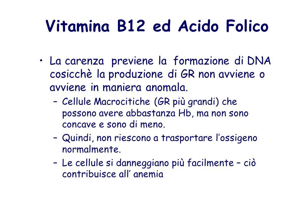 Vitamina B12 ed Acido Folico La carenza previene la formazione di DNA cosicchè la produzione di GR non avviene o avviene in maniera anomala. –Cellule