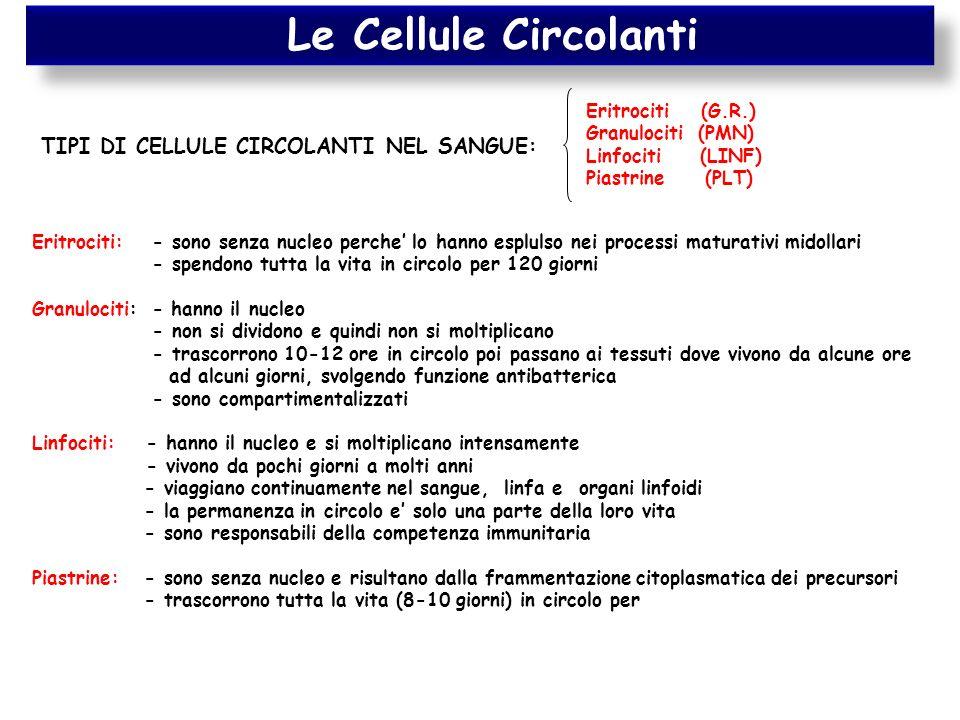 Le Cellule Circolanti TIPI DI CELLULE CIRCOLANTI NEL SANGUE: Eritrociti (G.R.) Granulociti (PMN) Linfociti (LINF) Piastrine (PLT) Eritrociti: - sono s